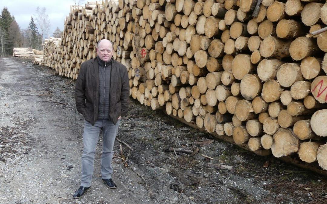 Kühne + Nagel exportiert gesägte Baumstämme in Containern über den JadeWeserPort